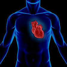 how to avoid heart disease